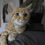 Passion, Chaton europeen à adopter