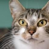 Tic, Chat europeen à adopter
