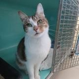 Sting, Chat europeen à adopter