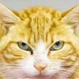 Djali, Chat europeen à adopter