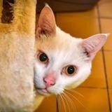 Lucho a14477, Chat europeen à adopter