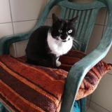 Eloa, Chat europeen à adopter