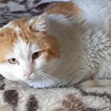 Kirikou, Chat europeen à adopter