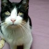 Oubliette, Chat europeen à adopter