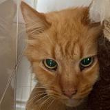 Bouboule (réservé), Chat europeen à adopter