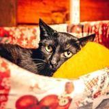 Owen 2, Chat europeen à adopter