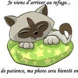 Feeling a14641, Chat europeen à adopter
