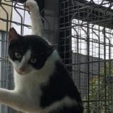 Moira, Chat europeen à adopter