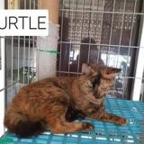 0 turtle, Chat europeen à adopter
