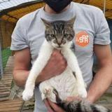 Luigi, Chat europeen à adopter