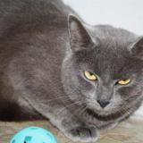 Hera, Chat europeen à adopter