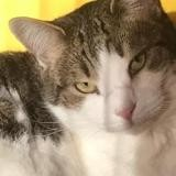 Aragon, Chat europeen à adopter