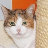 Pastelle pab22245, Chat europeen à adopter