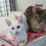 Jin, Chat europeen à adopter