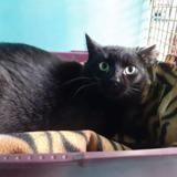 Olaf, Chat europeen à adopter