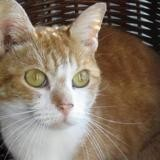 Leeloo, Chat europeen à adopter