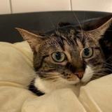 Kairi, Chat europeen à adopter