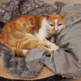 Leo, Chat europeen à adopter