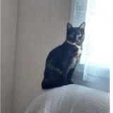 Anna, Chat europeen à adopter
