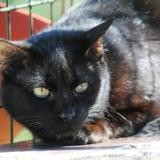 Stewy, Chat europeen à adopter