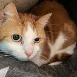 Elia, Chat europeen à adopter
