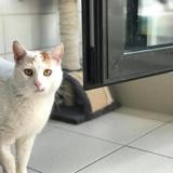 Donuts, Chat europeen à adopter
