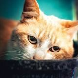 Rio, Chat europeen à adopter