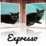Expresso, Chat europeen à adopter