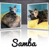 Samba, Chat europeen à adopter