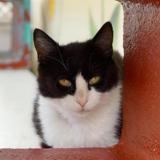 Lili, Chat europeen à adopter