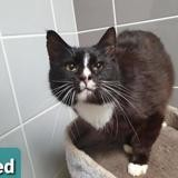 Fred, Chat europeen à adopter