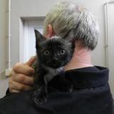 Abby (réservé), Chaton europeen à adopter
