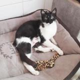 Bernadette, Chat europeen à adopter