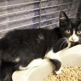 Malo [chaton], Chaton europeen à adopter