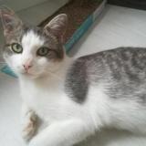 Felix, Chat europeen à adopter
