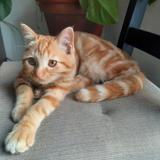 Sunny, Chaton européen à adopter