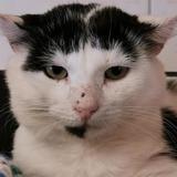 Yuni, Chat européen à adopter