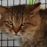 Leeroy, Chat européen à adopter