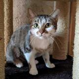 Vaiana, Chat européen à adopter