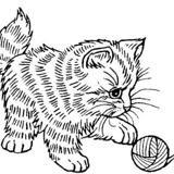 Emeraude, Chat persan à adopter