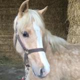 Ghazal, Animal cheval à adopter