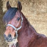 Gamil, Animal cheval à adopter