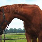 Birdie, Animal cheval à adopter