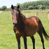 Kherrata, Animal cheval à adopter