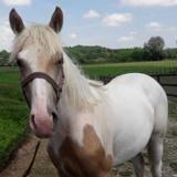 Iraty, Animal cheval à adopter
