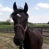 Irya, Animal cheval à adopter
