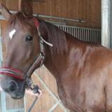Samala tica, Animal cheval à adopter