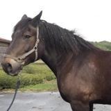 Kamaelle, Animal cheval à adopter