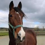 Junior, Animal cheval à adopter