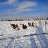 A_nommer, Animal chèvre à adopter